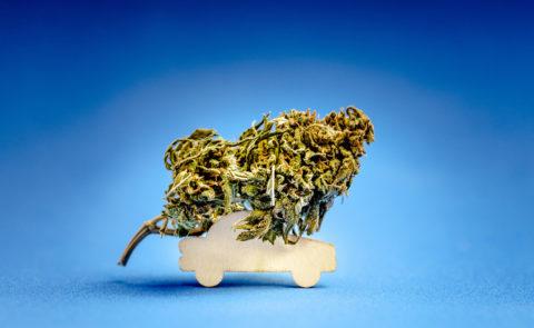 Cannabis driving information